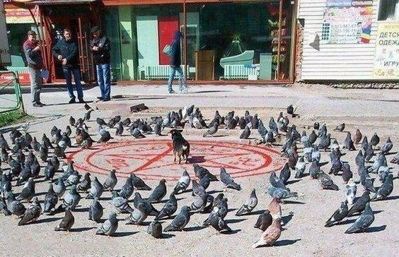 wrong neighborhood meme of pigeons in the middle of the street