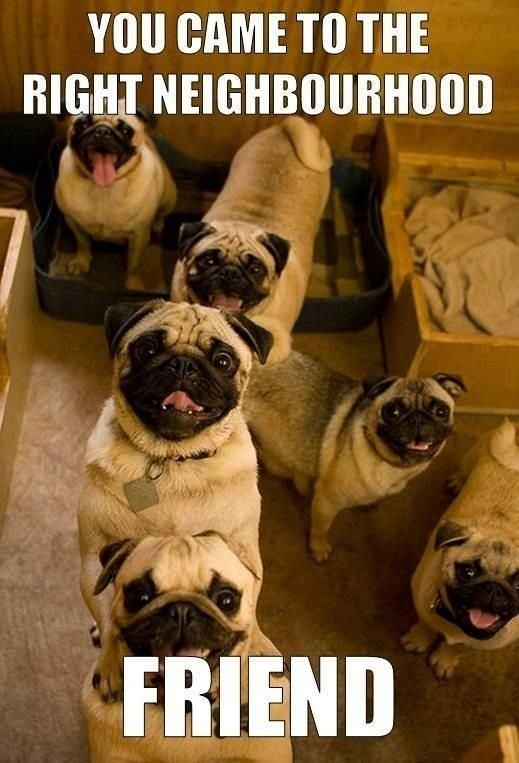 wrong neighborhood meme of pugs staring excitedly at the camera