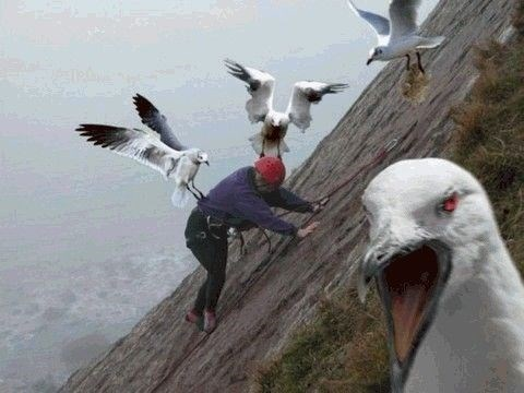 wrong neighborhood meme of a man getting attacked by birds