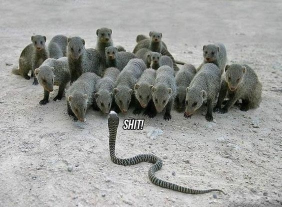 wrong neighborhood meme of a lone snake in front of animals