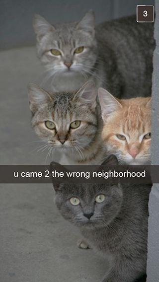 wrong neighborhood meme of cats staring menacingly at the camera