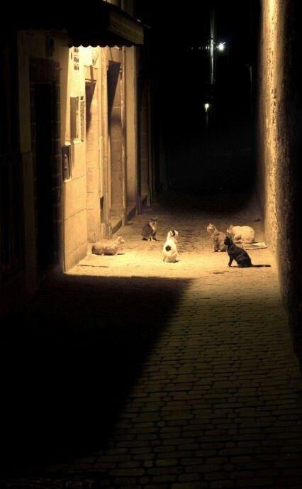 wrong neighborhood meme of cats standing in a dark alley