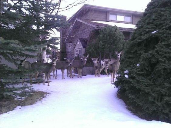 wrong neighborhood meme of deer in the snow