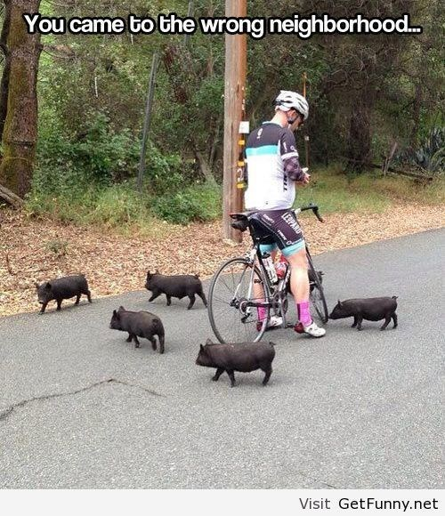 wrong neighborhood meme of piglets on a road