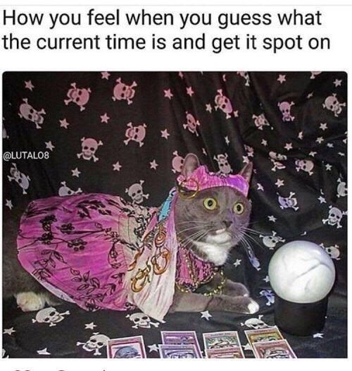 picture of cat dressed as fortune teller next to crystal ball representing how I feel when I guess the time right