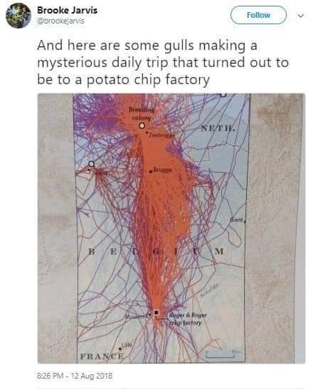 map tracking flying patterns of gulls traveling to potato chip factory
