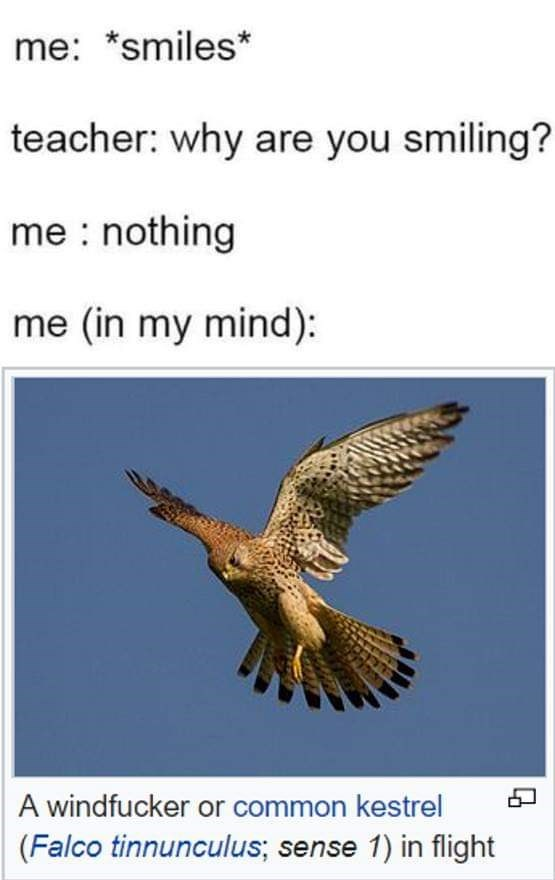 meme about laughing to yourself in class with Wikipedia entry about hilariously named bird