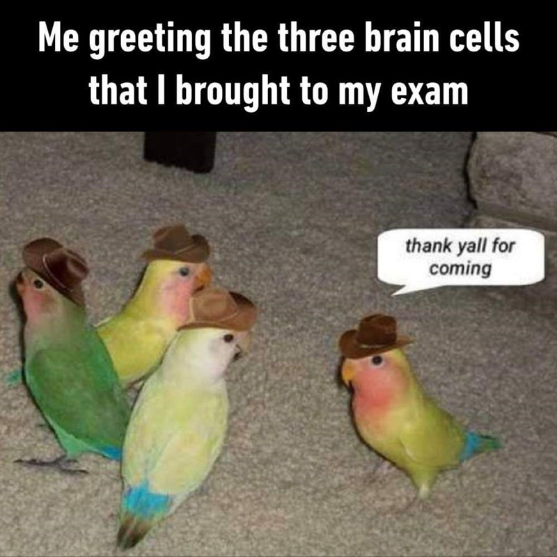 meme about struggling to think during an exam with picture of 4 parrots in cowboy hats having a meeting