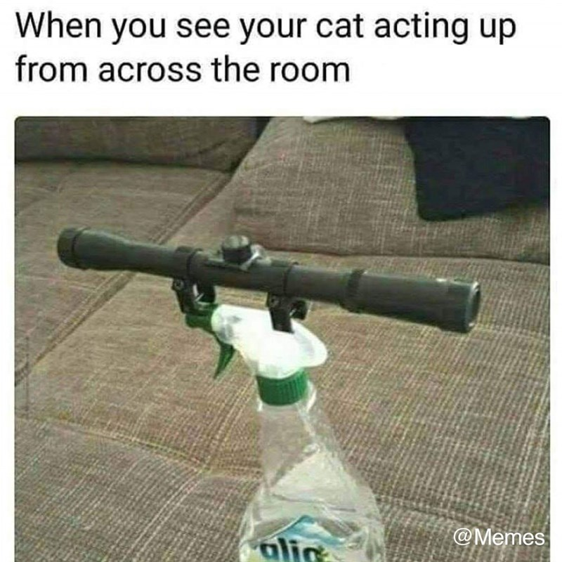 picture of water spray bottle with snipers scope on top of it so you can spray your cat from far away