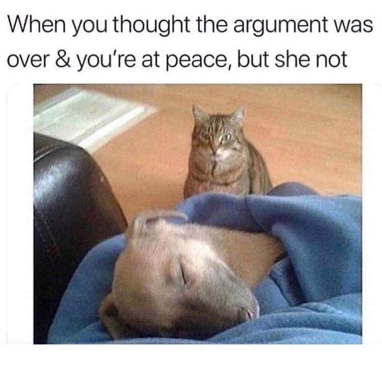 picture of dog sleeping peacefully while a cat is staring at it murderously representing girlfriend still being mad after an argument ends