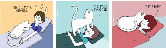 comic of a cat waking up his human by getting in the personal space of their owner