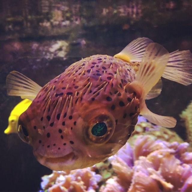 cute animals - Fish