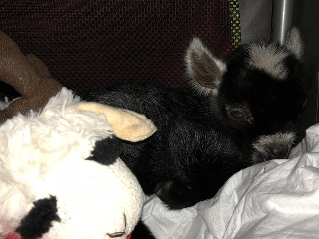 cute animals - Nap