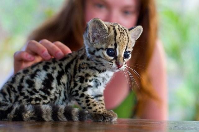 cute animals - Cat - @Chulstian Srot