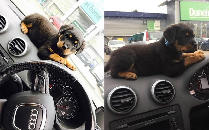 Dog - Du at home y and pt