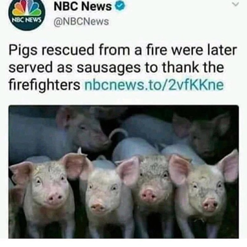 Funny tweet about firefighters eating sausage made from pigs they saved.