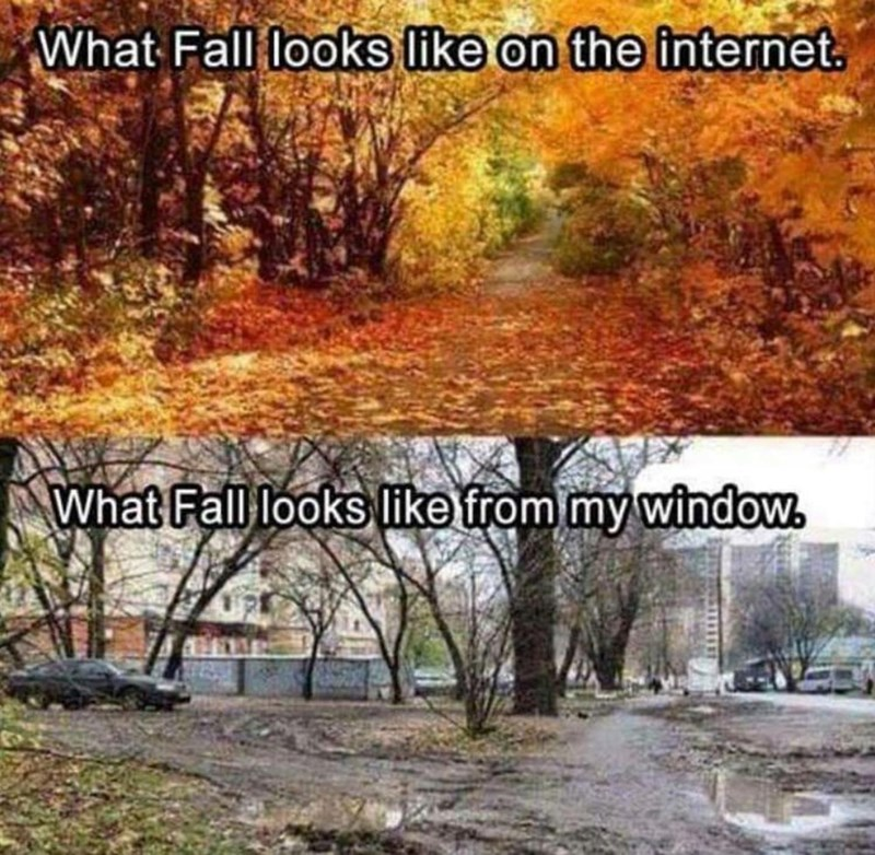 expectation vs reality meme about fall looking photogenic in pictures but ugly and dreary in real life
