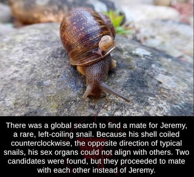 post about a snail that could not mate due his sex organs not being aligned