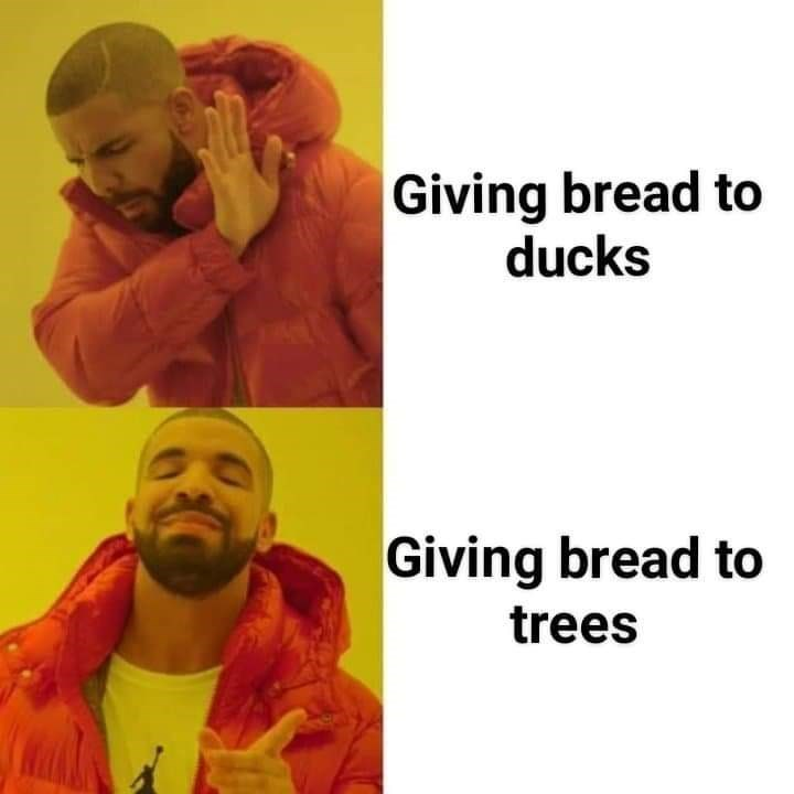 """Drake meme where the top panel represents """"Giving bread to ducks"""" and the bottom panel represents """"Giving bread to trees"""""""