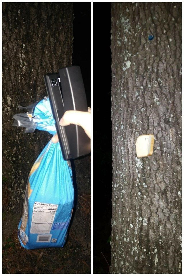 picture of hand holding bag of bread and stapler and another picture of slice of bread stapled to tree