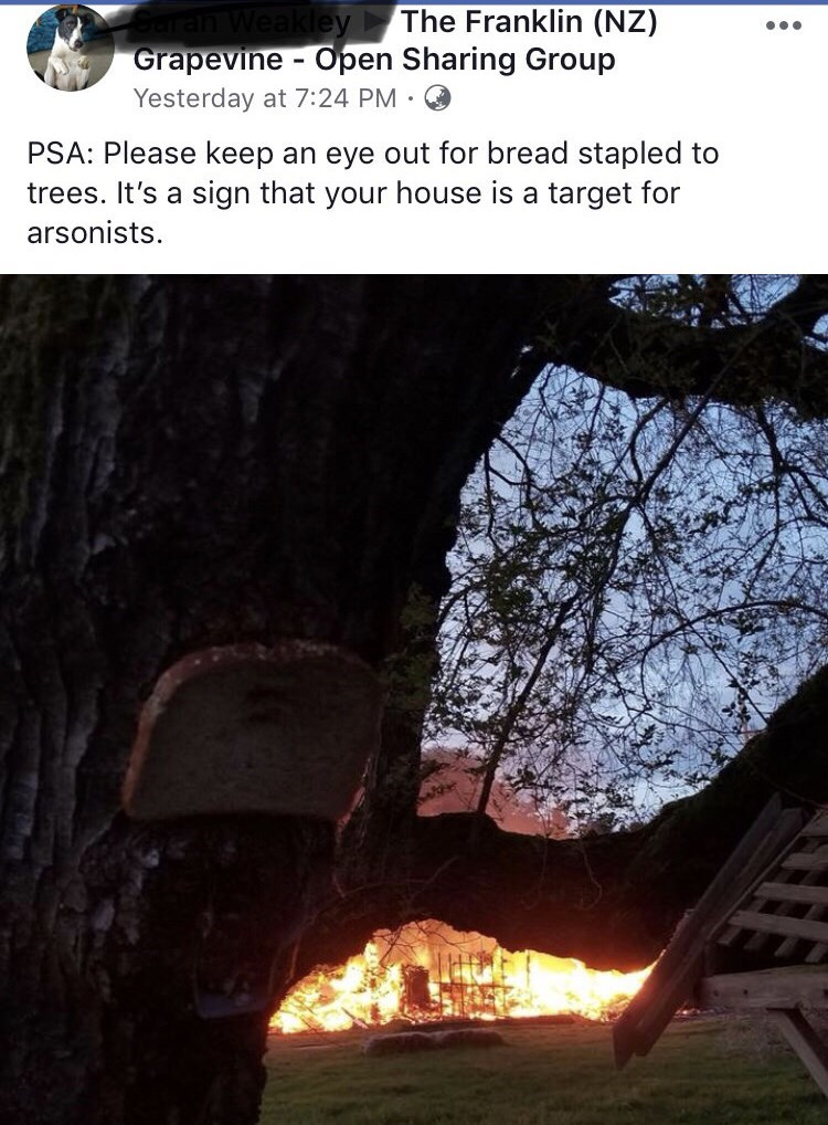 picture of slice of bread stapled to tree in front of a burning house