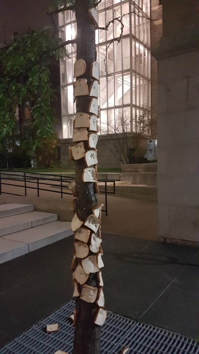 picture of tree almost entirely covered by bread stapled to it
