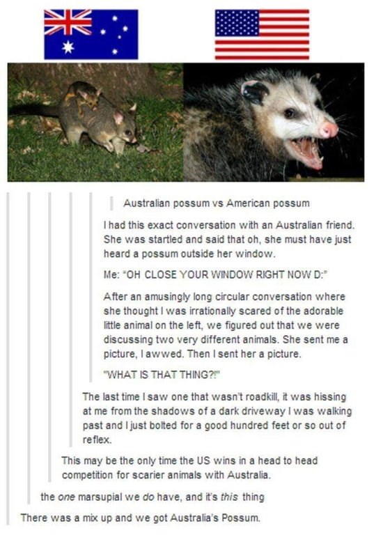 funny tumblr post Someone describing the difference between an Australian possum and an American possum