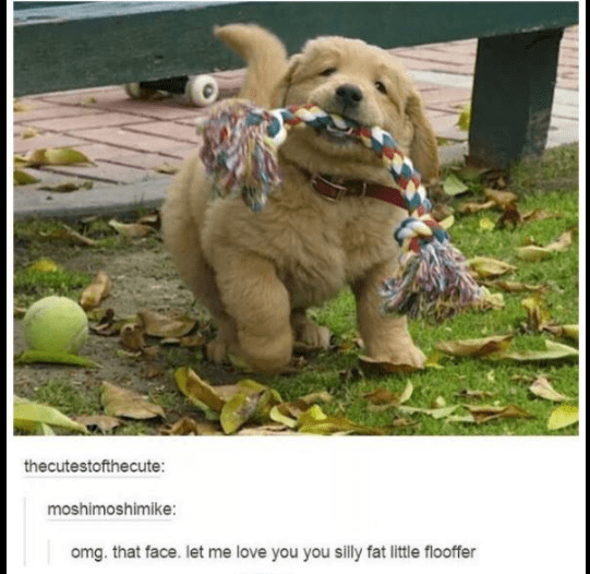 funny tumblr post omg. that face. let me love you you silly fat little flooffer