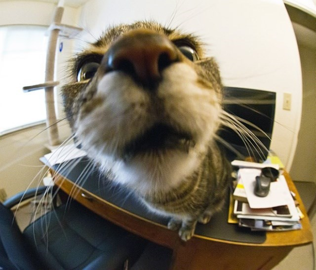 cat staring into a camera lens on top of an office desk