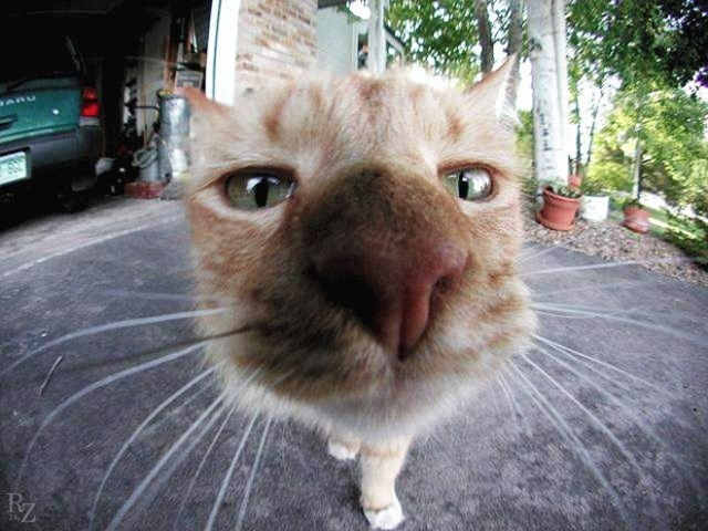 cat looking into a camera outside a garage