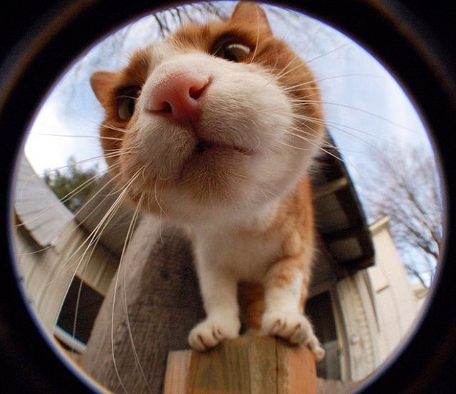 cat standing on a wooden post while staring at a camera