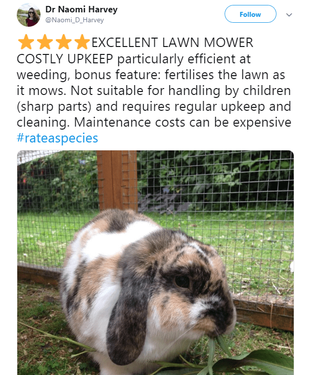 picture of rabbit in hutch EXCELLENT LAWN MOWER COSTLY UPKEEP particularly efficient at weeding, bonus feature: fertilises the lawn as it mows. Not suitable for handling by children (sharp parts) and requires regular upkeep and cleaning. Maintenance costs can be expensive #rateaspecies