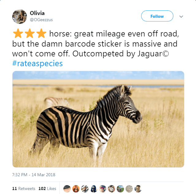 picture of zebra horse: great mileage even off road, but the damn barcode sticker is massive and won't come off. Outcompeted by JaguarO #rateaspecies 7:32 PM 14 Mar 2018 11 Retweets 102 Likes