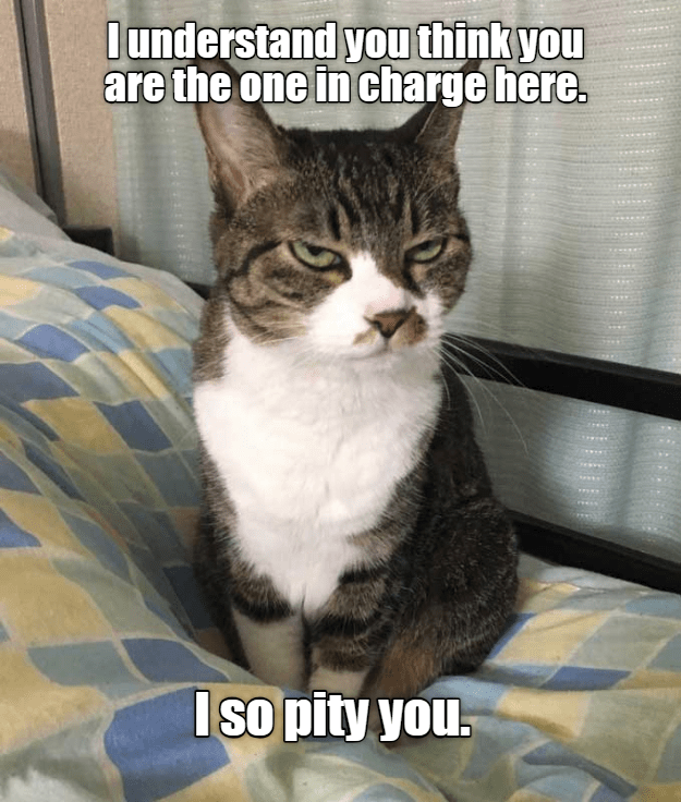 cat in charge cat memes - 9242166784