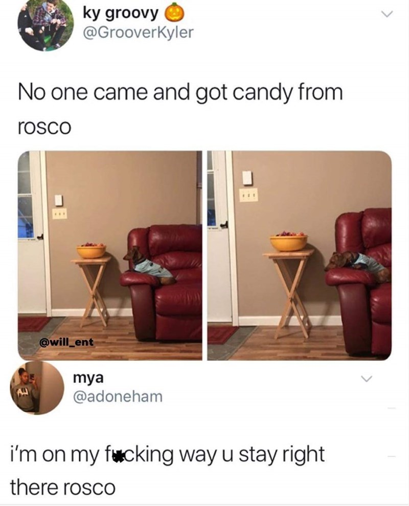 tweet post about a dog on Halloween waiting to give candy and no one shows up