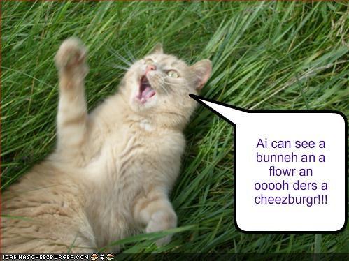 Cheezburger Image 924218112