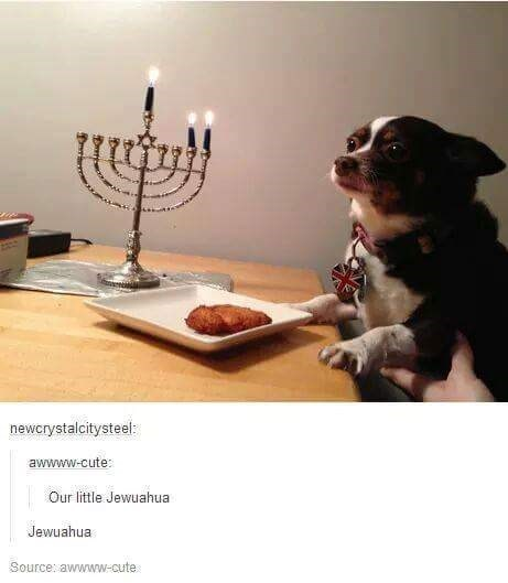 meme of a chihuahua next to a menorah and a latke