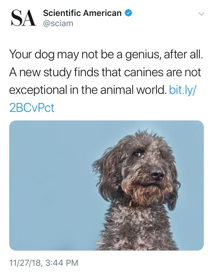 tweet post about dogs not being smart after a study was done