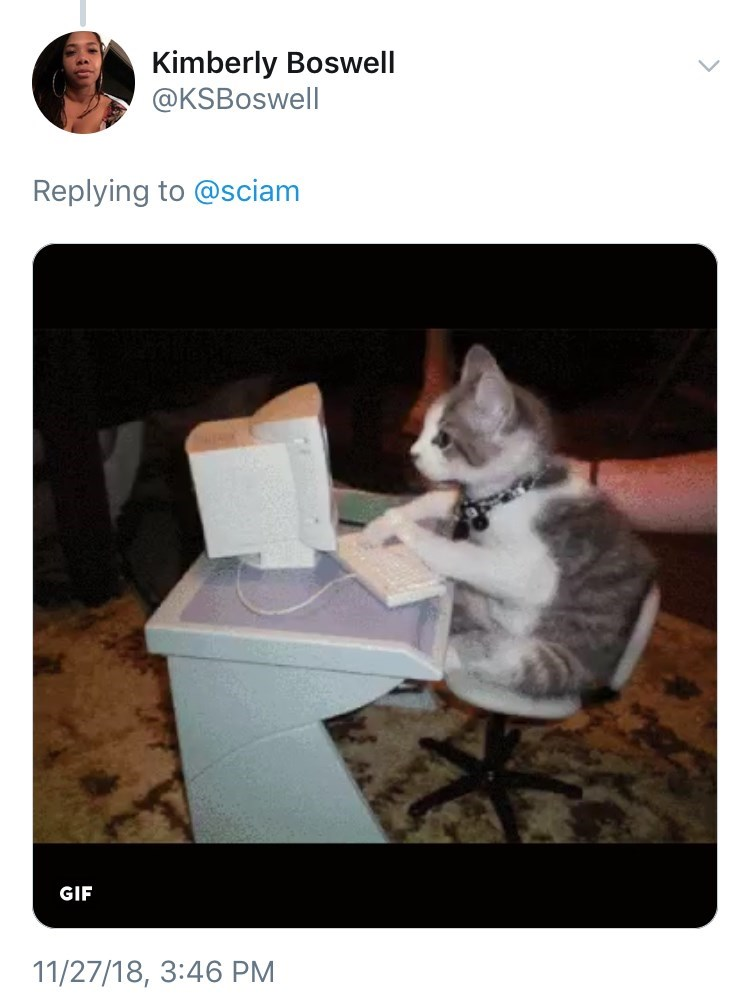 tweet post about how dogs are not exceptional and blaming it on cats