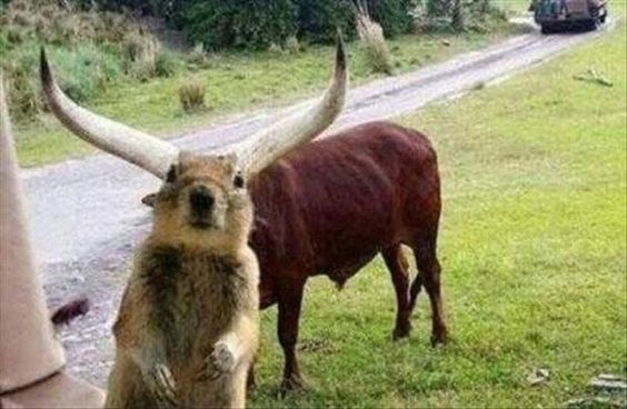 confusing perspective of a squirrel and a bull