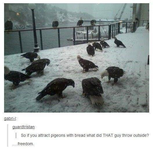 murica meme - Snow - gabri-l guardtristan: | So if you attract pigeons with bread what did THAT guy throw outside? freedom.