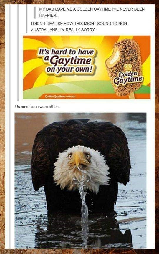 """murica meme - Bald eagle - MY DAD GAVE MEA GOLDEN GAYTIME IVE NEVER BEEN HAPPIER. I DIDN'T REALISE HOW THIS MIGHT SOUND TO NON- AUSTRALIANS. I'M REALLY SORRY It's hard to have a """"Gaytime on your own! Golden Gaytime Çoldengaytimes.comau Us americans were all like."""