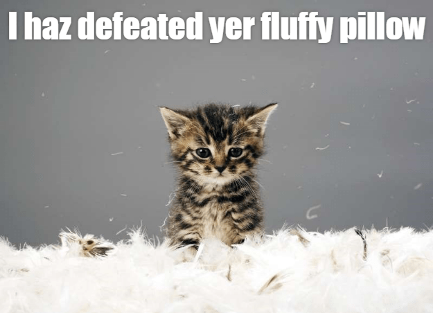 Cat - I haz defeated yer fluffy pillow