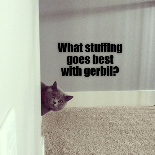 Cat - What stuffing goes best with gerbil?