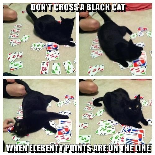 Cat - TON'T CROSSA BLACKCAT 12 WHEN ELEBENTYPOINTS ARE ON THELINE