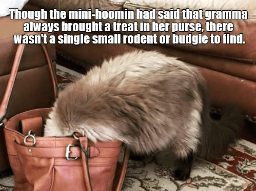 Fur - Though the mini-hoomin had said that gramma always broughta treat in her purse, there wasn't a single small rodent or budgie to find.