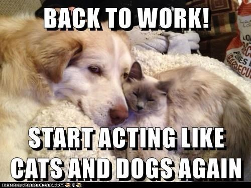 Canidae - BACK TO WORK! CACROECU START ACTING LIKE CATS AND DOGS AGAIN ICANHASCHEE2EURGER cOM