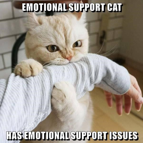Cat - EMOTIONAL SUPPORT CAT HAS EMOTIONAL SUPPORT ISSUES