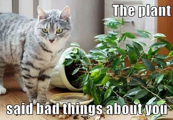 Cat - The plant said bad things about vou