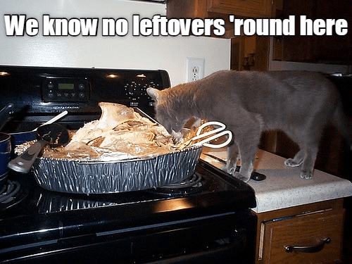 Cat - We know no leftovers round here